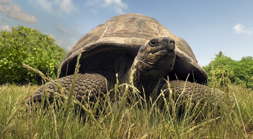 aldabra watching out