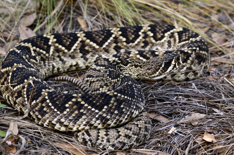 The snake can hide itself well in its habitat through the pattern