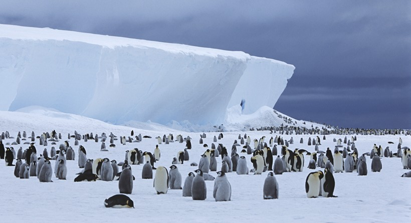Emperor Penguin colony at iceberg
