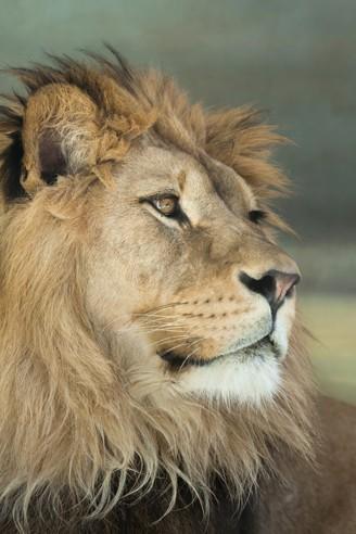 how big is a lions dick ebony teen sex tube