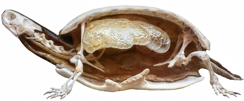 section of a stuffed turtle